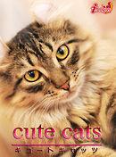 cute cats11 アメリカンカール
