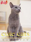 cute cats09 ロシアンブルー